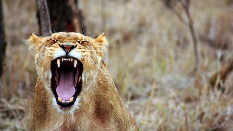 Aprenda a lidar com a raiva no ambiente profissional