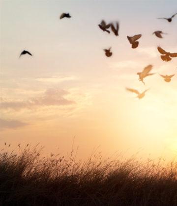 Você sabe perdoar?  Aprenda táticas para superar a mágoa